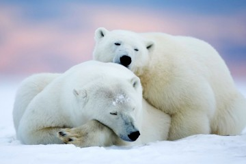 polar bears 360x240 - Horse & Donkey riding