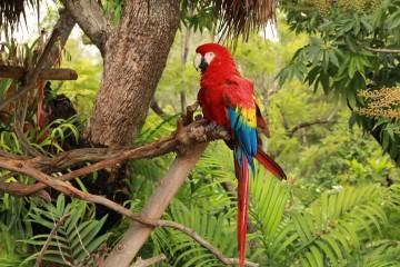 tropical rainforest parrot 360x240 - Bird watching