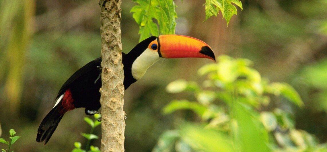 tropic toucan 1140x530 1140x530 - پیشنهاد سال جدید 2018
